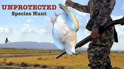 Hunting an Unprotected Species of Doves in Arizona VLOG
