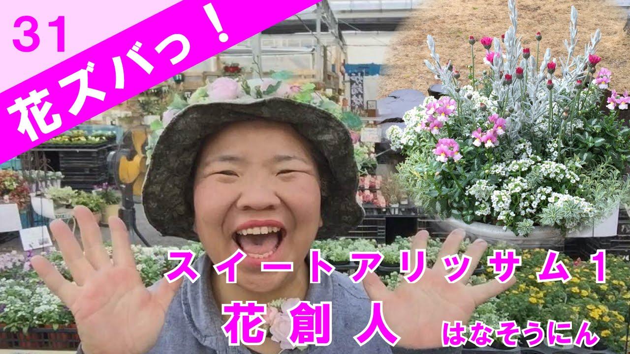 スイートアリッサム_長くなっちゃった【花ズバっ】31旬の花とその使い ...