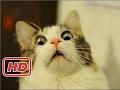 NTV best funny cat