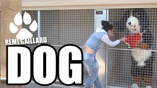 Dog (remi Gaillard)