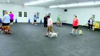 World Class Dog Kennels, Beginner Obedience Class, Chicago, Il.