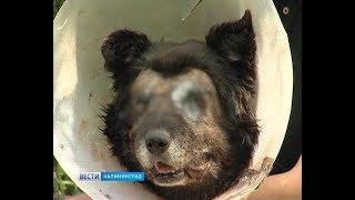 В Калининграде бродячему псу выжгли глаза