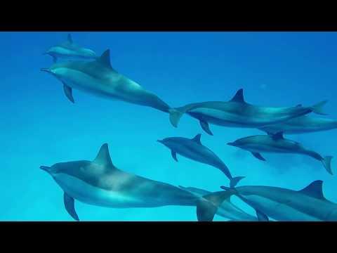 GoPro Schnorcheln in gypten - Rotes Meer - Haie Delfine