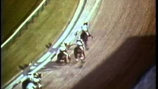Secretariat wins the 1973 Preakness Stakes