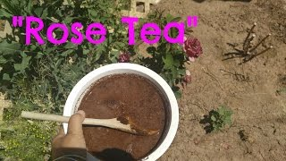 Using tea bags to fertilize roses