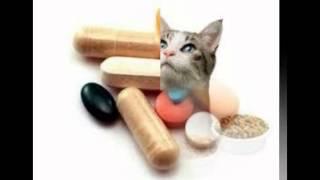 витамины для кошек гимпет