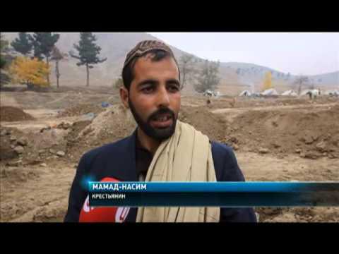 Вопрос: Выращивают ли в Афганистане Мак ГМО Кто выращивает Зачем Ваше мнение?