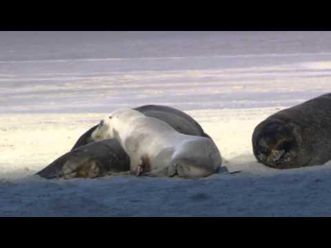 Naturaleza Y animales/ Naturally and animals