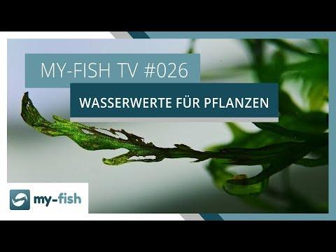 Die wichtigsten Wasserwerte für Aquarienpflanzen | my-fish TV