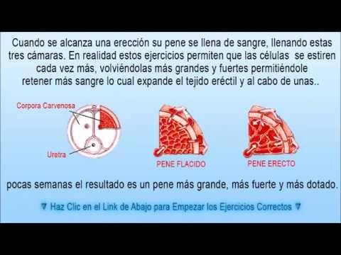 El spray para el aumento del miembro penilux las revocaciones