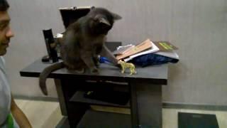 Cat Being a Jerk