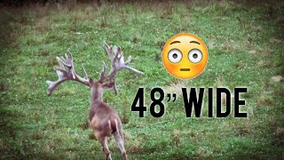 Widest Buck on Earth | World Record ?