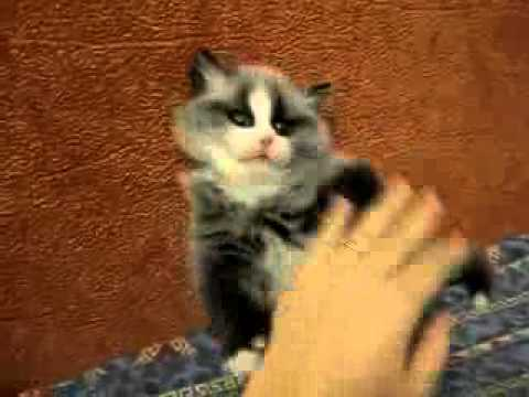 Кот енот ютуб