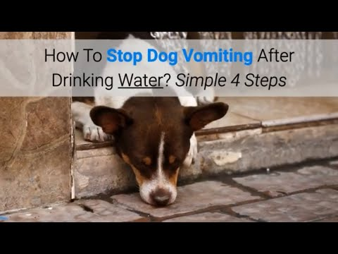 How To Stop Dog Vomiting After Drinking Water? Simple 4 Steps