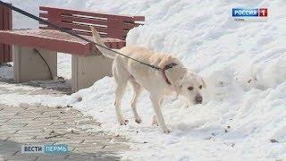 Собачье дело: сможет ли закон повысить культуру владельцев четвероногих?
