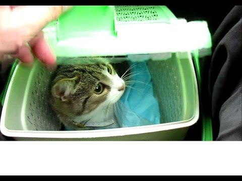Как везти кошку на дальнее расстояние в машине и в поезде?