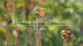 《早春ガーデニング》メイン花壇へ花苗の植え付け*庭の様子《T's Garden》