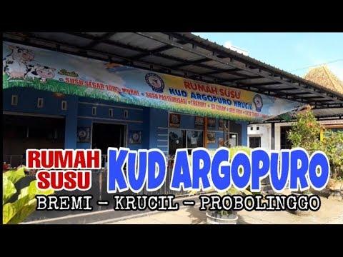 segerrr!!!-susu-&-hawanya-seger-|-rumah-susu---probolinggo-|-indonesian-food-|-bank-kuliner