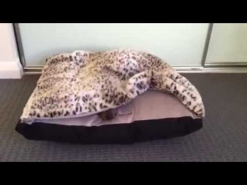 burrow-bed-for-small-dogs-and-cats
