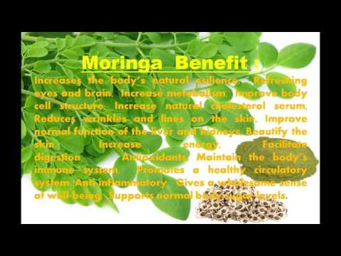 Moringa Oilefera Organic Suppliers and farm