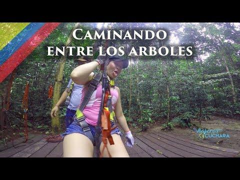Caminando entre los arboles a 40 mts - walking among the trees at 131 feet  /Amazonas #6