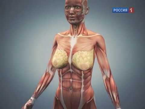 От чего зависит форма груди. О самом главном. Программа о здоровье на Россия 1