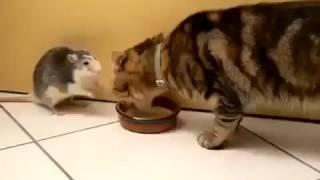УЖОС! Крыса МОНСТР отбирает еду у кота  Животные приколы