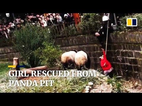 Unha nena cae no foso dos osos panda