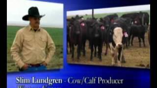 Maximize Cattle Feed Efficiency = Vita Ferm W/ Amaferm