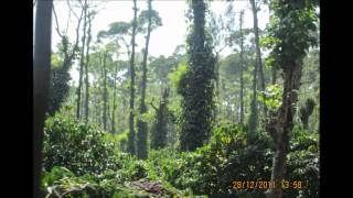 www.99shelter.com - Properties (Estates) for sale in Coorg - Karnataka - 9845338158