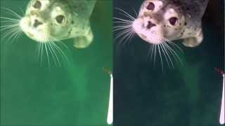 GoPro Hero 2 Underwater Color Correction