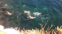 Scopata in mare