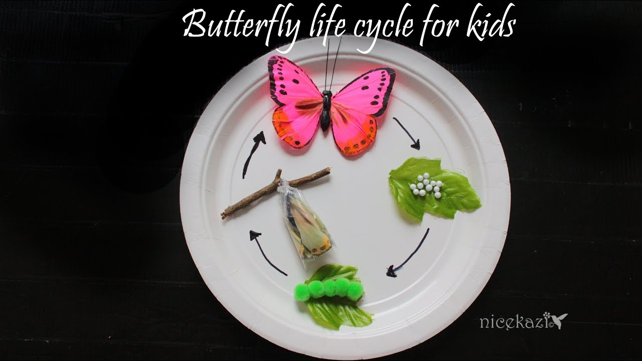 How To Make 3d Butterfly Life Cycle For Kids Metamorphosis Science