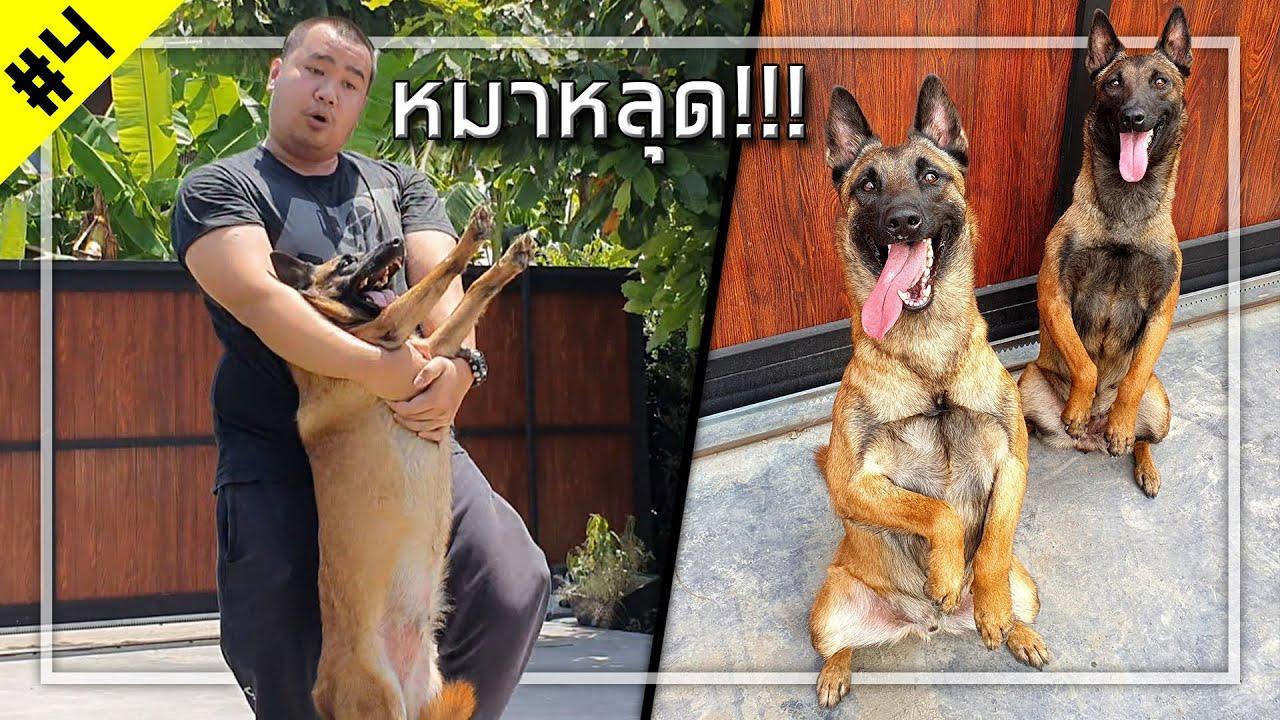 👤 ตามล่าหมาหลุด วันหยุดต้องเที่ยว!!!  [วัยรุ่นร้อยโล#4]