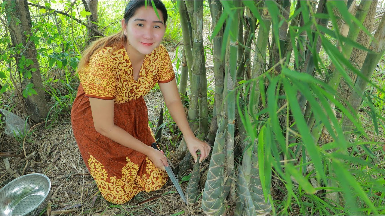 Yummy Dried Bamboo Shoot Cooking Dig Bamboo Shoot From Bamboo