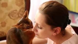 Нежный абиссинский кот