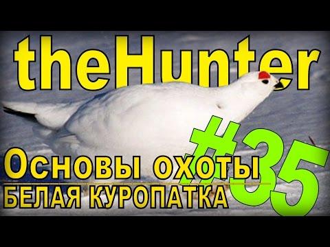 Видео: охота на диких животных смотреть онлайн