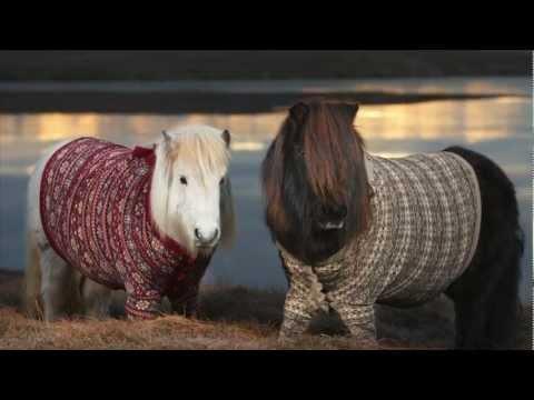 Shetland Ponies in Cardigans - VisitScotland - YouTube
