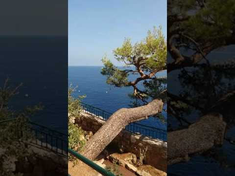 Gradina japoneza Monaco