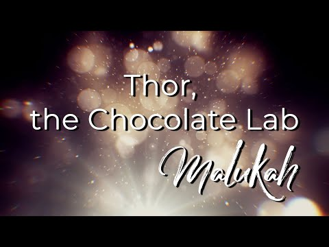 Thor the Chocolate Lab - Malukah - Official Lyric Video
