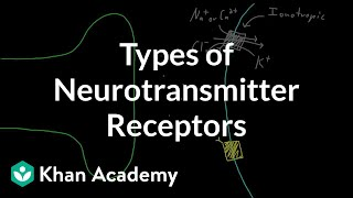 Types of neurotransmitter receptors | Nervous system physiology | NCLEX-RN | Khan Academy