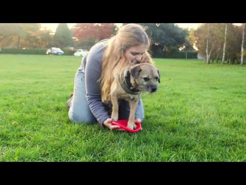 Frisbee dog tricks