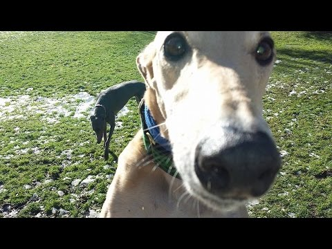 Greyhound Adoption of Ohio Holiday Brunch Video - 2014