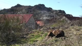 """ionline.pt: Inverneiras e Brandas, a """"vida loba"""" de Castro Laboreiro (03/2011)"""