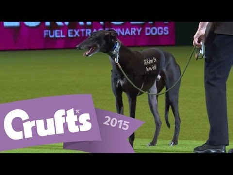 Display by Retired Greyhound Trust | Crufts 2015