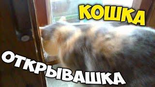 Как КОШКА ФОРТОЧКУ ОТКРЫВАЕТ, ВИДЕЛИ? Кошка открывашка! :)