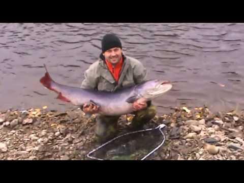 Taimen Fishing Russia