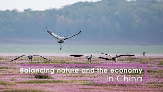 Live: Balancing nature and the economy in China改革开放四十年,看中国的湖泊生态与经济的平衡发展