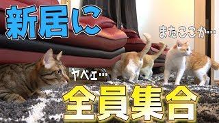 初めて猫全員揃って新居に解き放ってみたら…!!