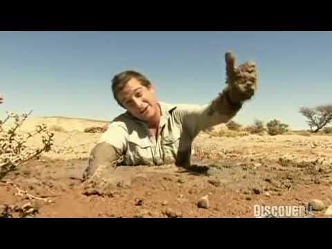 Download Bear Grylls Sahara Quicksand  Learn To Live